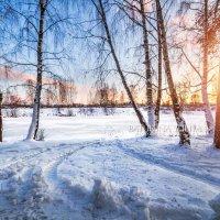 Зимний сон деревьев :: Юлия Батурина