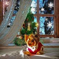 Скоро Новый Год....год собаки...С Наступающим!!! :: Анжела Пасечник