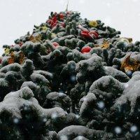 Новогоднее настроение :: Роман Никитин