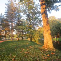 солнечный вечер в Царском Селе :: Елена
