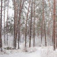 Зимний лес :: Анатолий Клепешнёв