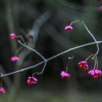 Цветки... :: Ольга Милованова