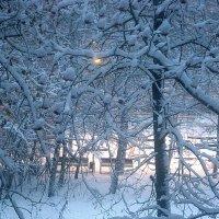 Снежным утром :: Елена Семигина