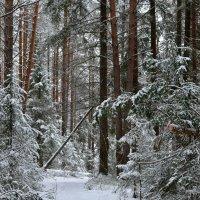 Тропинки зимой. :: Наталья