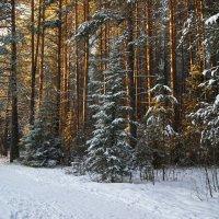 Низкое зимнее солнце. :: Наталья