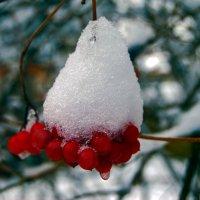 Зимняя ягода ... :: Aleks Ben Israel