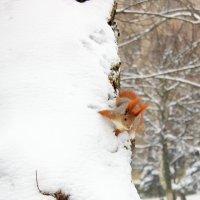 Снежная сказка раскрыла объятья. :: Валентина ツ ღ✿ღ