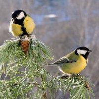 Птички синички. :: Hаталья Беклова