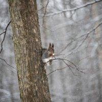 Снег идет. :: Владимир Безбородов