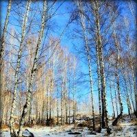 Зимы начало.. :: Александр Шимохин