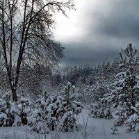 Набирает силы снеговей... :: Лесо-Вед (Баранов)