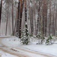 К январю торопится декабрь... :: Лесо-Вед (Баранов)