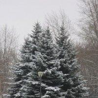 Белый снег на ветках елей :: Дмитрий Никитин