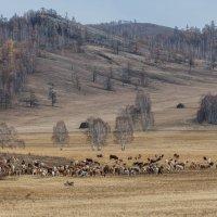 Одинокий пастух :: Анатолий Соляненко