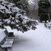 Тишина снежного парка :: Alexander Varykhanov