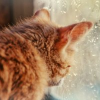 А за окном то дождь, то снег :: Ольга Мальцева