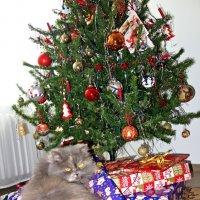 """""""..Да, я только посмотреть...знаю, знаю , что до рождества еще 2 дня..."""" :: Galina Dzubina"""