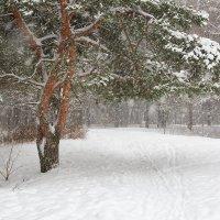 Снег идёт :: Александр Синдерёв
