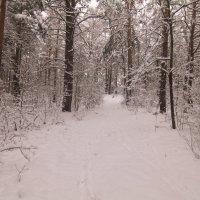 в лесу :: Владимир Зырянов