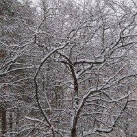 И деревья все в снегу :: Дмитрий Никитин