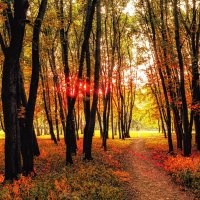 Золотая осень :: Игорь Дутов