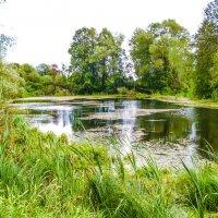 Люблю озёра и пруды! Прекрасен отдых у воды! :: Александр Куканов (Лотошинский)