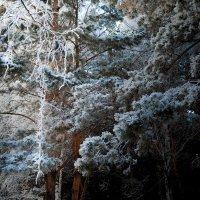 Зима :: Иван Янковский