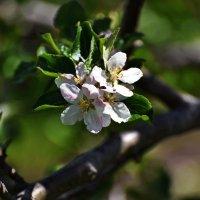 Запах весны ... :: Владимир Икомацких