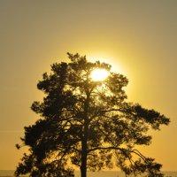 Во поле....дерево стояло.... :: Игорь Каплун