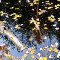 Осень..... :: Светлана Игнатьева