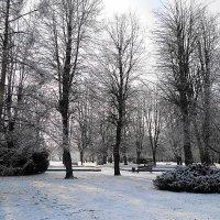 Парк острова Канта в зимнем убранстве :: Маргарита Батырева
