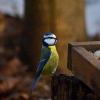 снимай! :: linnud