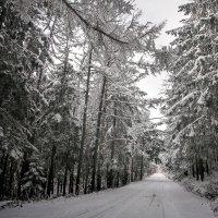 На лесной дороге :: Артём Удодов
