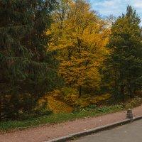 «  Осенний парк ещё прекрасен: Ковёр из листьев на земле;… » :: Андрей Нибылица