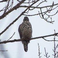 Нет, твоего голубя не видел :: Дмитрий Ерохин