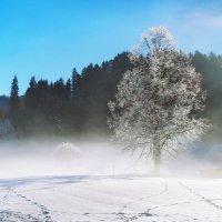 у леса на опушке жила Зима в избушке :: Elena Wymann