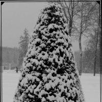 Зима в Екатерининском парке :: Маера Урусова