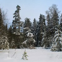 Лесные зарисовки :: Галина Новинская