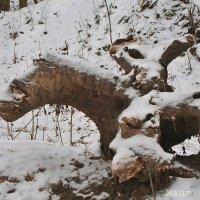 Встреча в лесу,собака и белка :: Лидия (naum.lidiya)