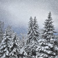 маленькой елочке холодно зимой... :: Мария Климова
