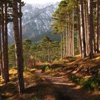 Дорога в горы :: Сергей Яворский