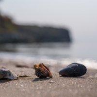 На морском песочке ... :: Александр Земляной