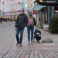 Собак по Таллину водили....как видно, Год Собачий на носу.... :: Tatiana Markova