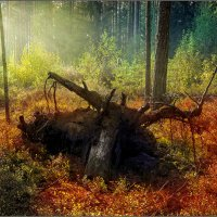 Сентябрьский лес :: Станислав Лебединский
