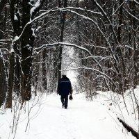 Прогулка в лесу :: Aleks Ben Israel