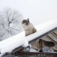 Выход кота в открытый космос :: Алёна Гершфельд