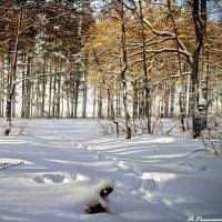 В морозный день гулять не лень! :: Андрей Заломленков