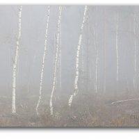 зима  в  тумане :: CHAIKA '