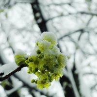 Странная весна. Strange spring. :: Юрий Воронов