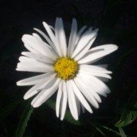 Чёрный, белый, жёлтый :: Дмитрий Никитин